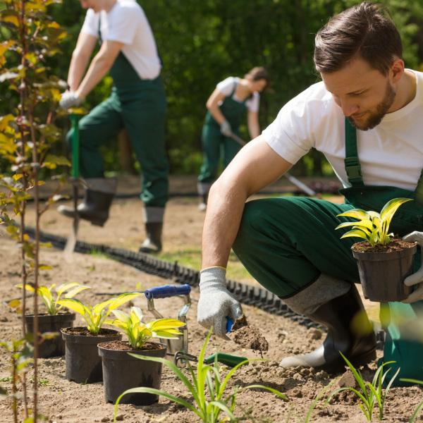 CAPa Jardiner paysagiste